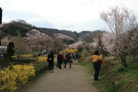 コピー 〜 花見山 22・4・11 024.jpg