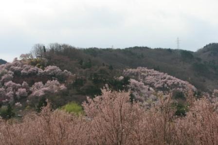 コピー 〜 花見山 22・4・11 028.jpg