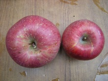 リンゴ 006.jpg