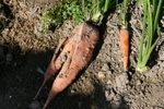 野菜 021.jpg
