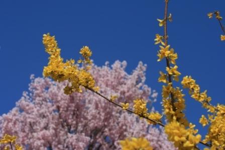 花見山 2011 006.jpg