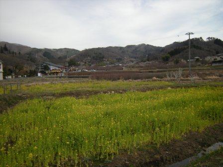 花見山 2011 003.jpg