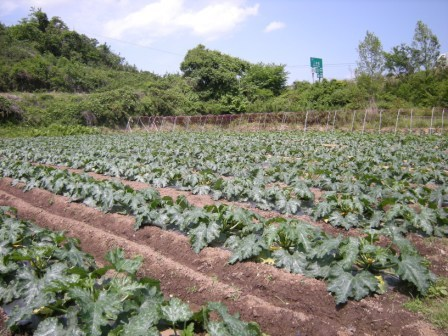 ちたた農園 001.jpg