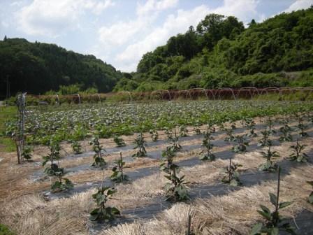 ちたた農園 004.jpg
