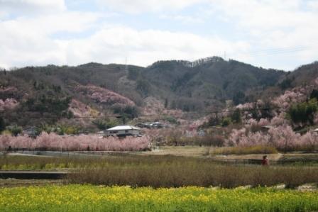 コピー 〜 花見山 22・4・8 002.jpg
