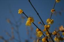 花見山 025.jpg