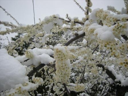 雪 004.jpg