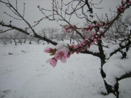 雪 005.jpg