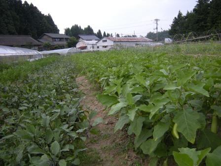 小豆畑農園 005.jpg