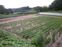 小豆畑農園 007.jpg